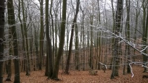Sopot - w dolinie biały dach Opery Leśnej