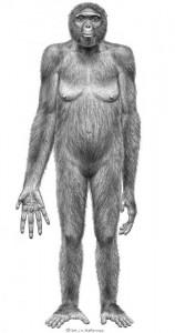 Ardi 4,4 mln - starsza o 1,2 mln lat od Lusie. Najstarsza forma mająca cechu ludzkie i małpie o wyprostowanej postawie   źródło: www.natureworldnews.com