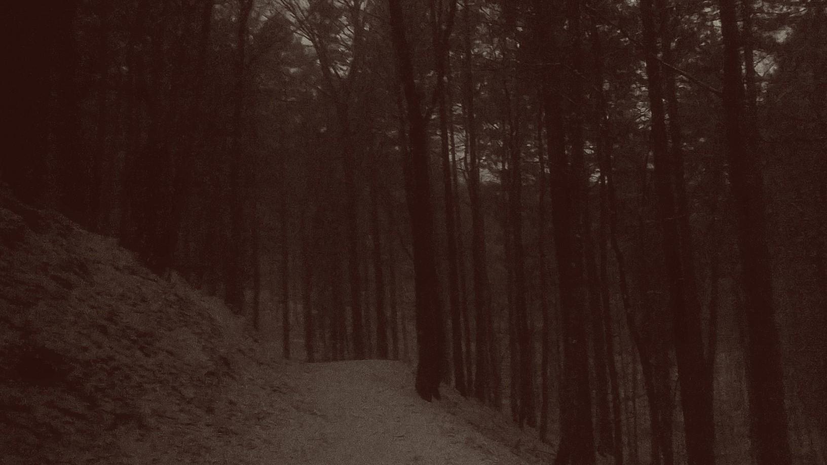 spadł śnieg, który rozjaśnia leśne ścieżki