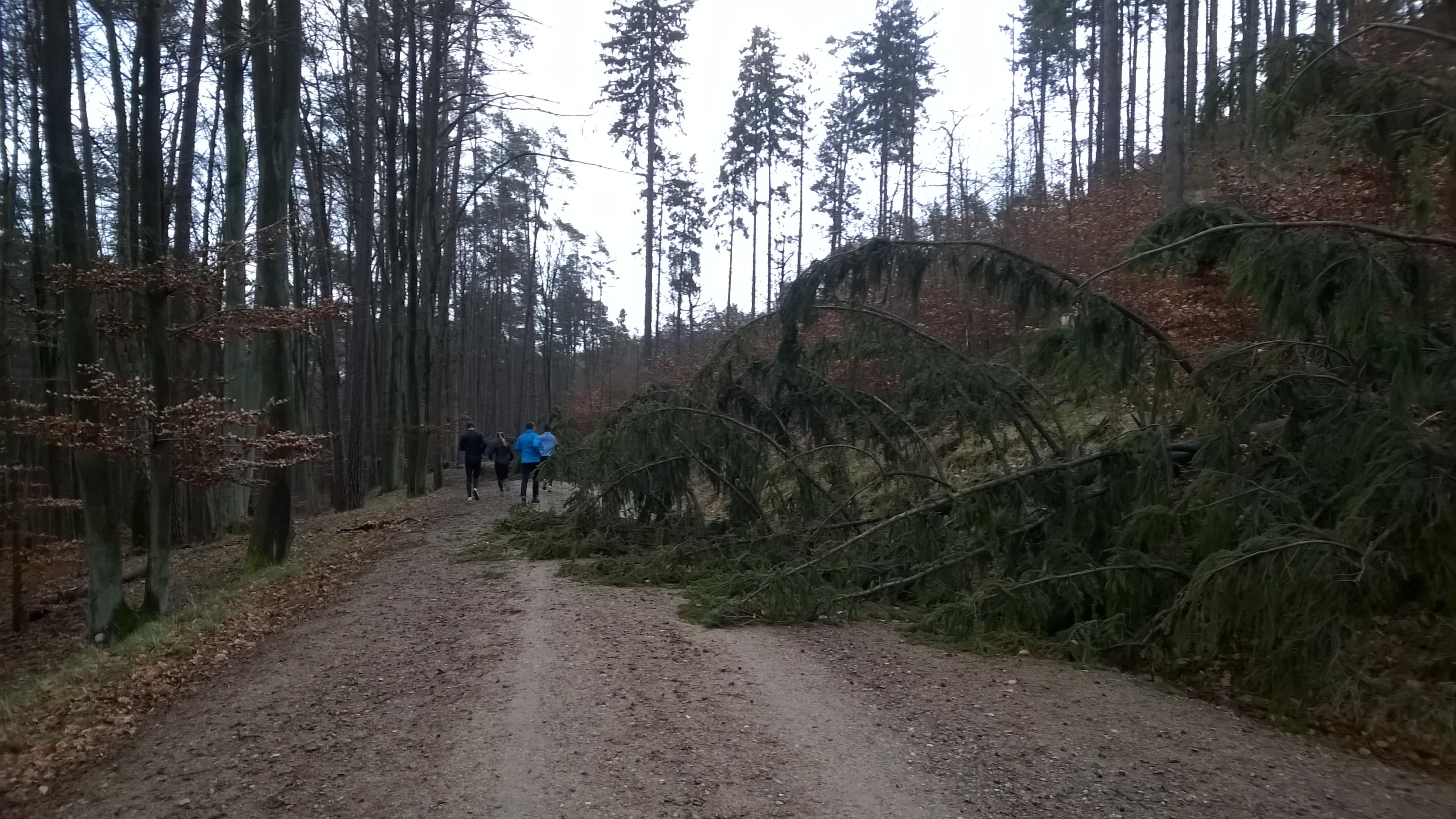 niedługo po wichurach - łamały się drzewa dość dobrze osłonięte