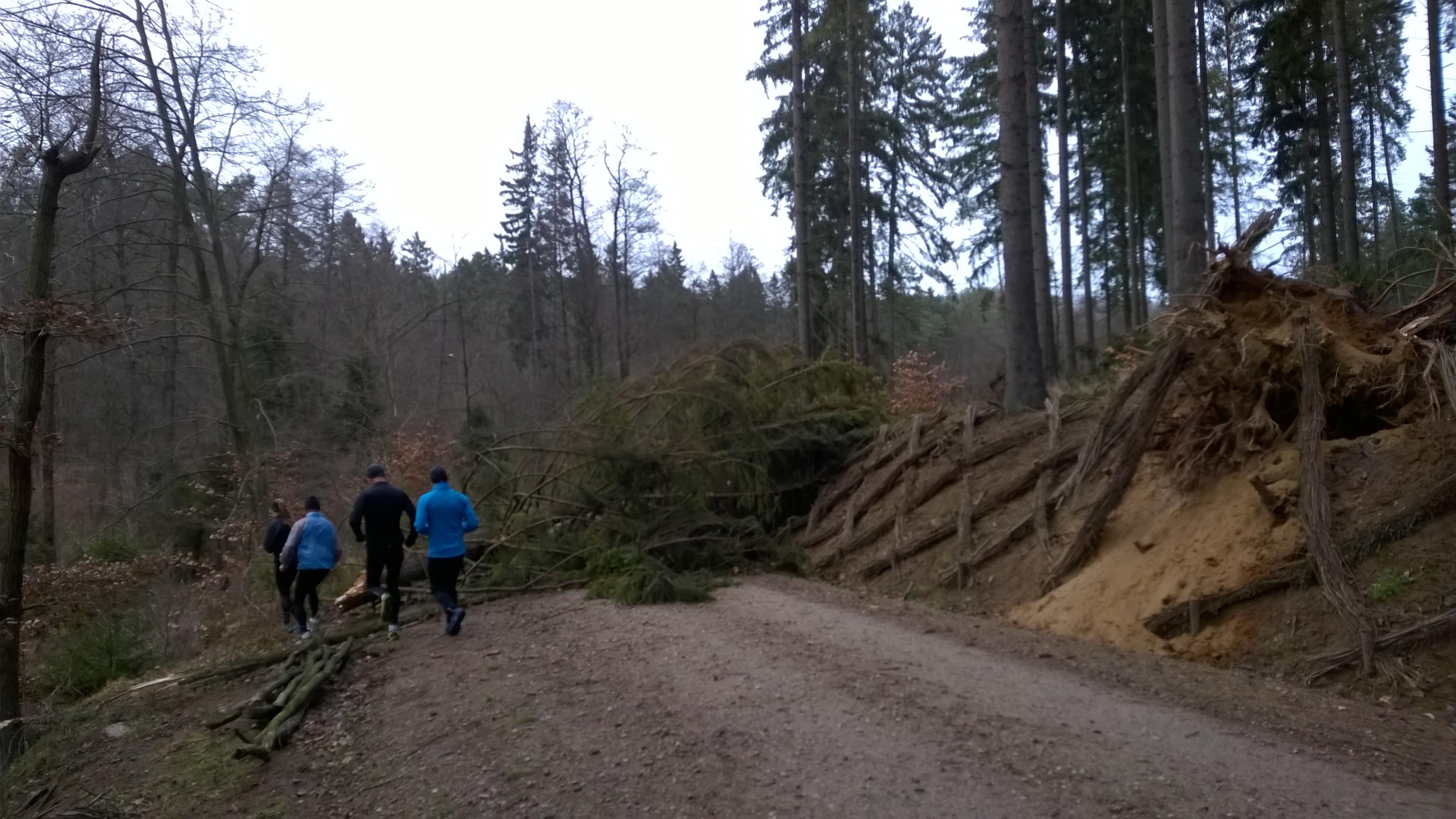 kolejne złamane drzewo