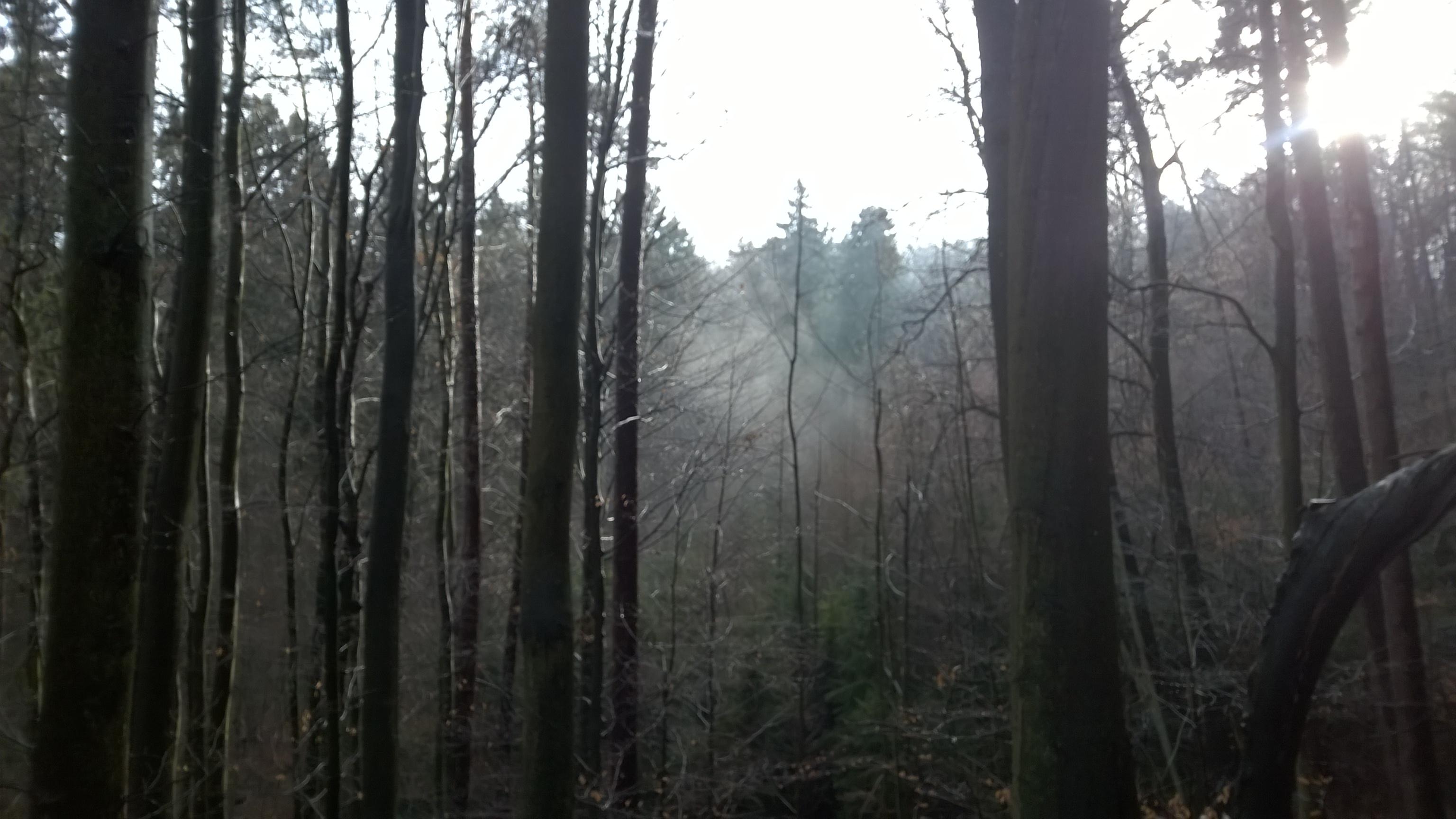 wiszące mgły na trasie