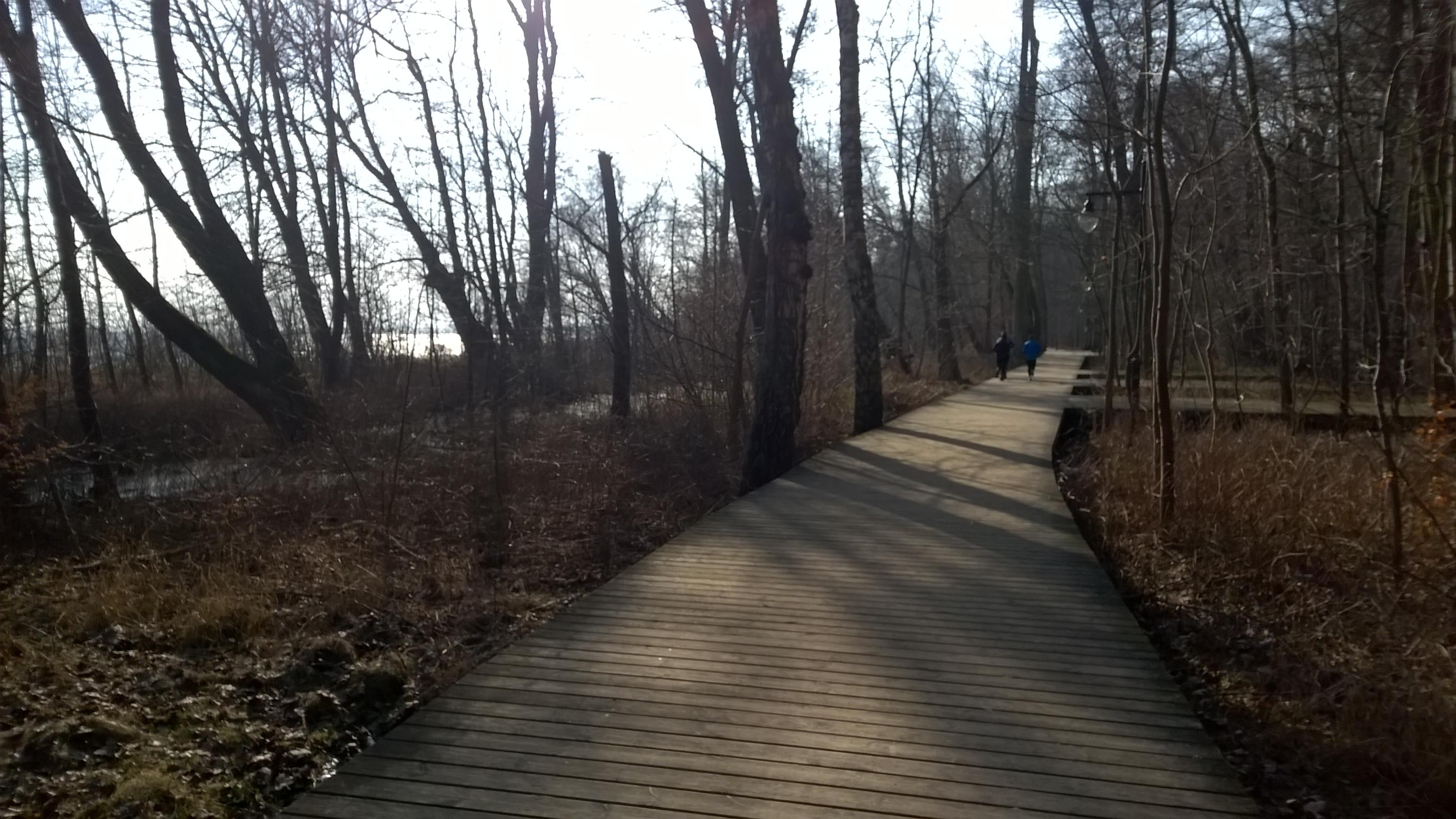 pomosty pozwalają przejść suchą nogą nad mokrym podłożem - koniec parku północnego w Sopocie.