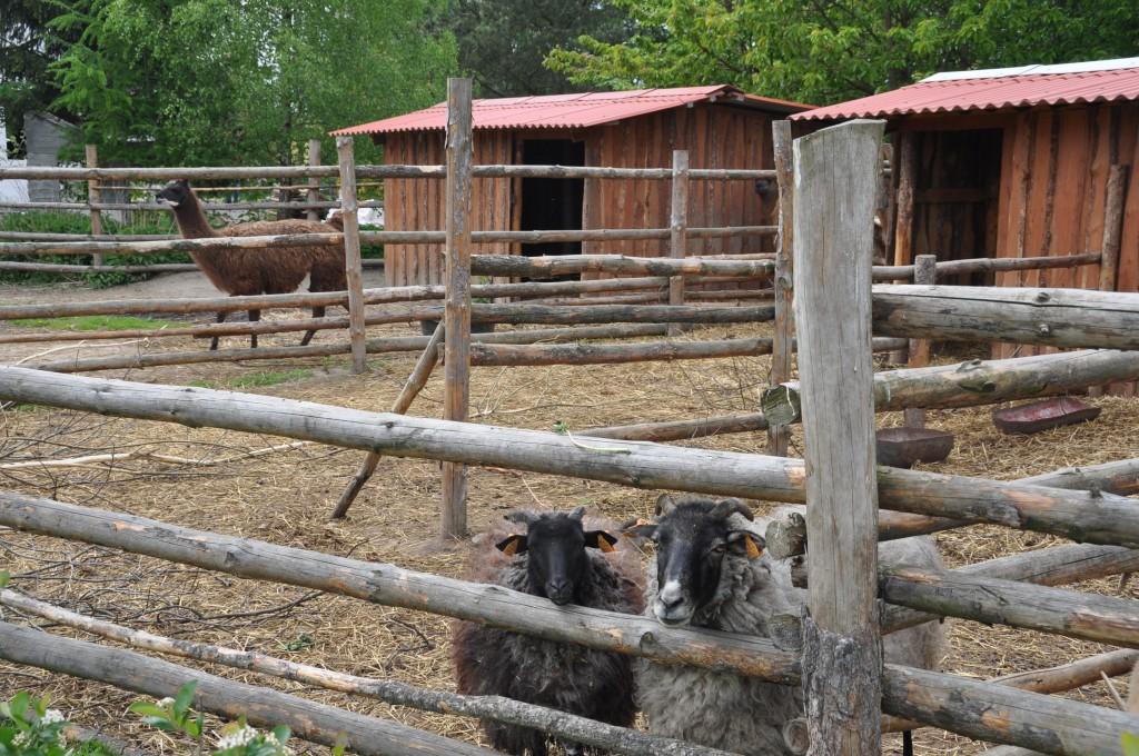 spotkanie niepełnosprawnych ze zwierzętami - potrafi odmieniać, bardzo im pomaga